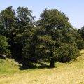 image 2007-07-16_13-23-39-jpg