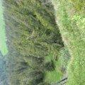 image 2008-06-14_15-37-36-jpg