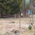 image 2014-03-02_00-40-53f-jpg