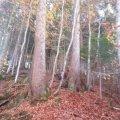 image 2014-11-08_15-11-59-jpg